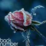 [Album] back number – Slowsongs [FLAC + MP3]